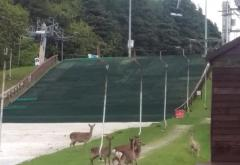 Deer on the ski slope at Kilternan